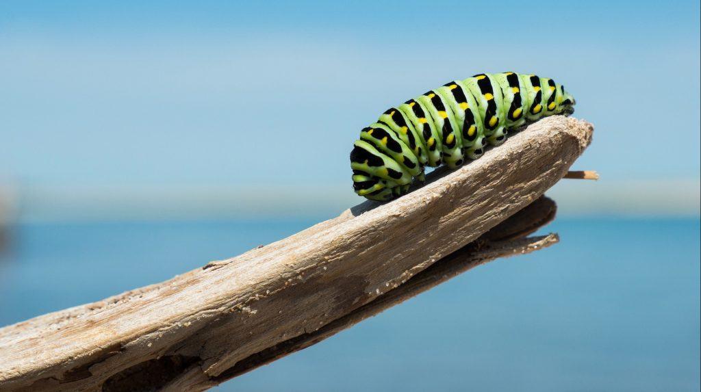 caterpillar 1209834 1920